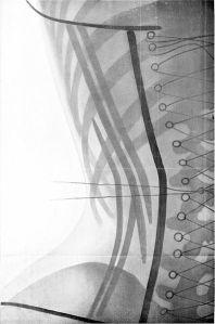 396px-Radiographie_(grandeur_naturelle)_du_corset_cambre_devant_(vue_de_dos)